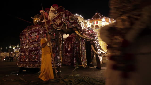 ms elephants eating quick snack as they preparing for buddhist procession 'esala perahera' in front of 'temple of tooth' audio / kandy, central province, sri lanka - sri lankan culture stock videos and b-roll footage