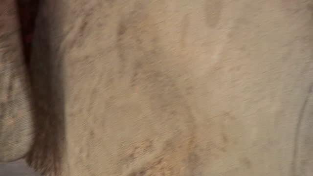 vídeos y material grabado en eventos de stock de ecu zi zo elephant's eye and skin, pinnewala, sri lanka - nariz de animal