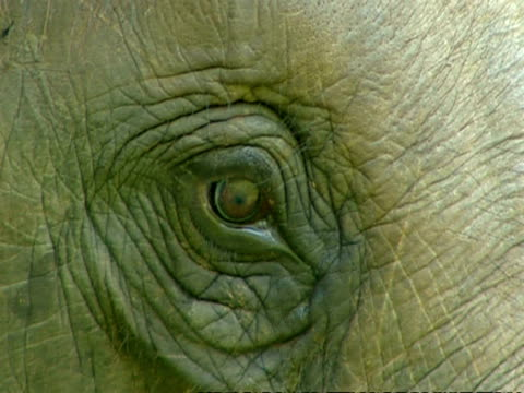 bcu elephants eye - sri lanka stock videos and b-roll footage