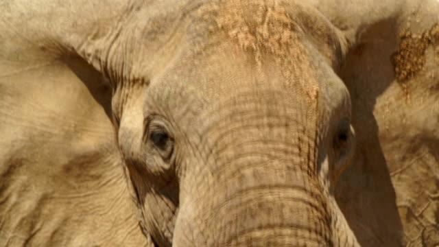 CU Elephant's head / Namibia