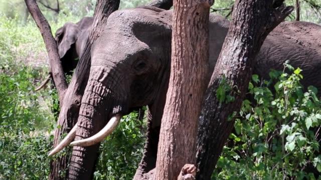 Elephants in Safari at Wild