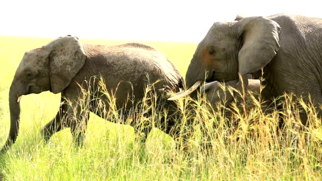 Elephants in Safari at Wild with tourists
