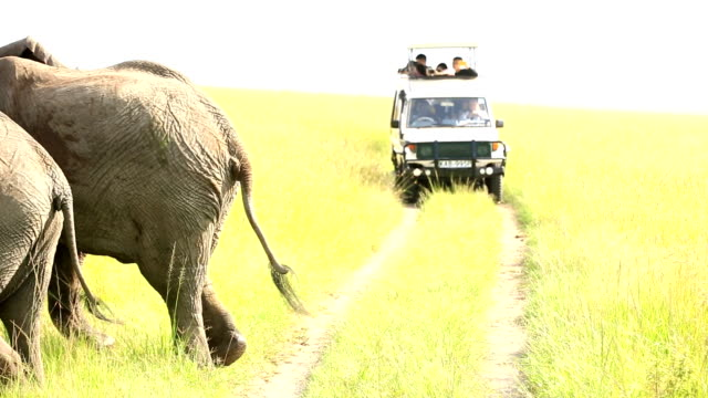 elephants in safari at wild with tourists - off road car stock videos and b-roll footage