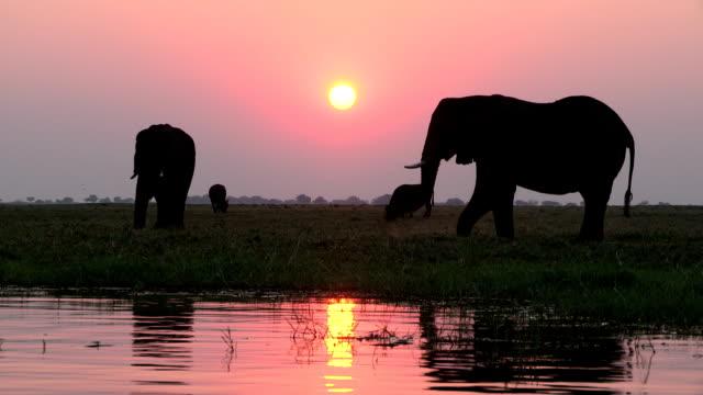 Elephants in silhouette against setting sun on the Chobe river.Chobe National Park.Botswana
