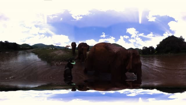 elephants in thailand - monoscopic image stock videos & royalty-free footage
