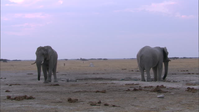 stockvideo's en b-roll-footage met elephants in the dried-out wetland of okavango delta - dierlijk gedrag