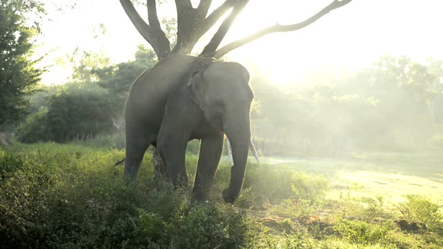 Elephants in the forest with mist
