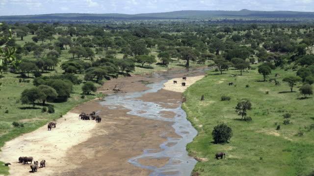 Elephants of Tarangire National Park, Tanzania
