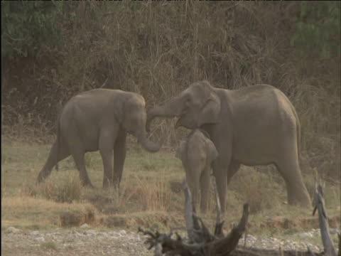 elephants push and shove - tierische nase stock-videos und b-roll-filmmaterial