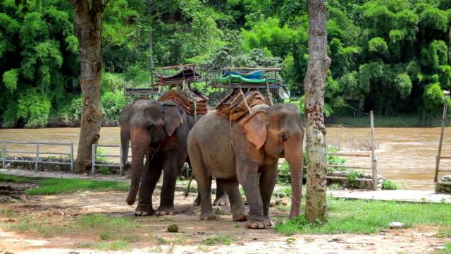 elefanten reiten für touristen, schwenken von - tropischer baum stock-videos und b-roll-filmmaterial