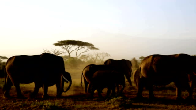 Elephants silhouette