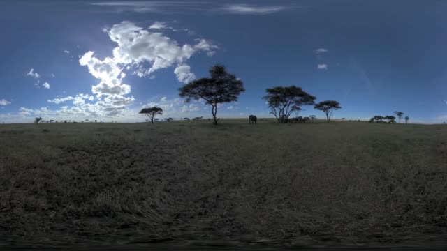 elephants under a tree in serengeti np - plain stock videos & royalty-free footage