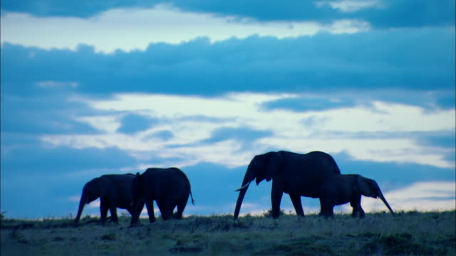 WS Elephants under blue twilight sky / Kenya