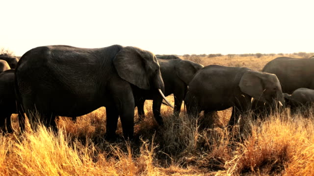 elephants - namibia stock videos & royalty-free footage