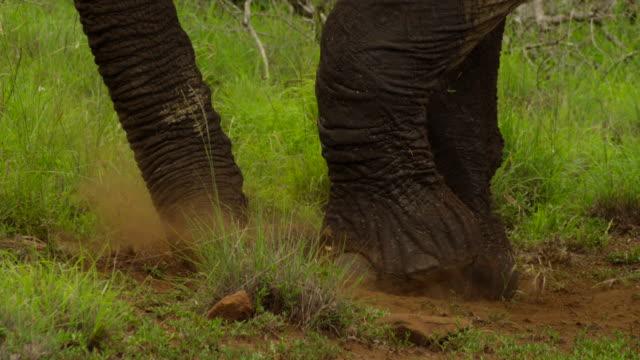 elephants - tierische nase stock-videos und b-roll-filmmaterial