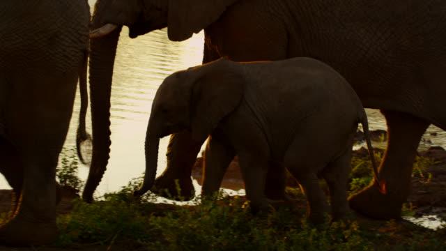 stockvideo's en b-roll-footage met elephants - kleine groep dieren