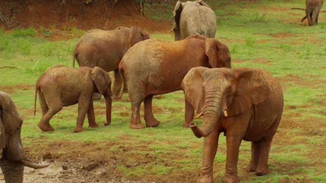 vídeos y material grabado en eventos de stock de elephants - nariz de animal