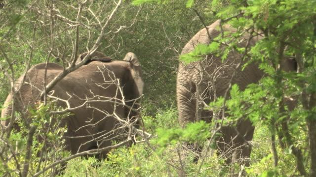 elephants - medium group of animals stock videos & royalty-free footage
