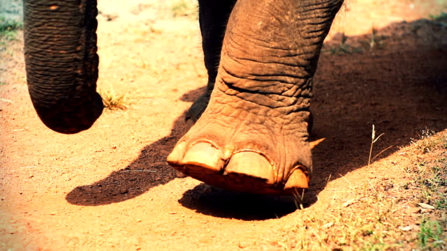 elefanten  - schotterstrecke stock-videos und b-roll-filmmaterial