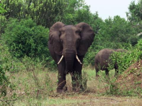 vídeos y material grabado en eventos de stock de elephants - artbeats