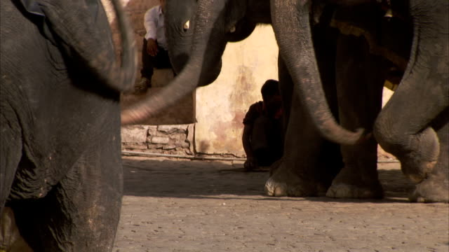 Elephants wag their trunks as pedestrians pass in Jaipur. Available in HD.