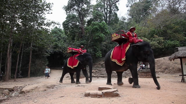 Elephants walking in Angkor, Cambodia