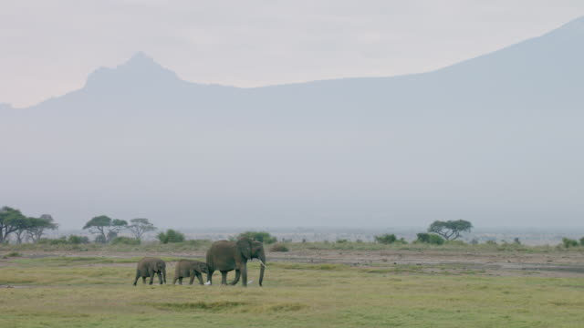 ws pan elephants walking on savanna landscape, with safari van moving in background / kenya - animal family stock videos and b-roll footage