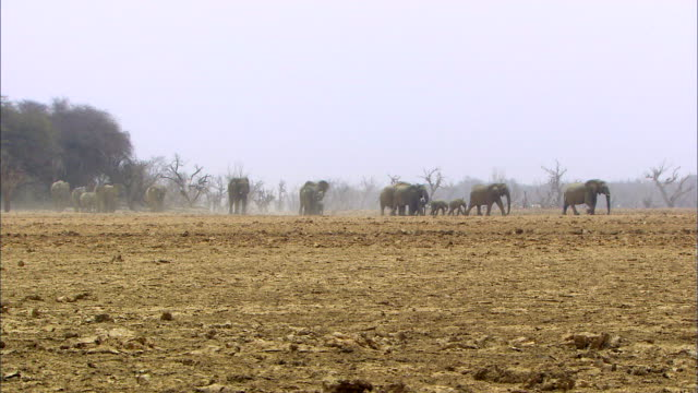 elephants walking - young animal stock videos & royalty-free footage