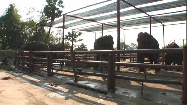 elephants wander around the inside of a corral. - corral stock videos & royalty-free footage