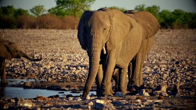 stockvideo's en b-roll-footage met elephants with baby - zuidelijk halfrond