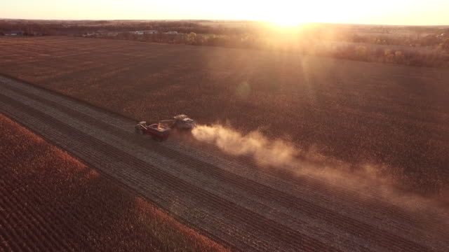 elevated sunset view of a farm combine harvesting gmo corn (maize). - grain cart stock videos & royalty-free footage
