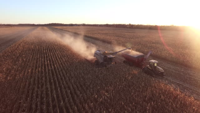 elevated sunset view of a farm combine harvesting gmo corn (maize) - grain cart stock videos & royalty-free footage