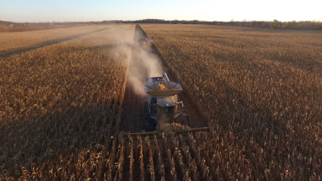 elevated view of a farm combine harvesting gmo corn (maize).) - harvesting stock videos and b-roll footage