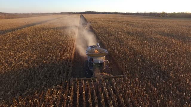 vídeos de stock e filmes b-roll de elevated view of a farm combine harvesting gmo corn (maize).) - modificação genética
