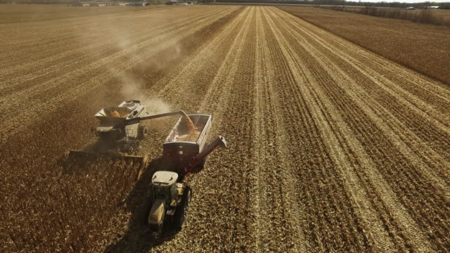 vídeos de stock, filmes e b-roll de elevated view of combine harvesting ripe gmo corn (maize). - cereal