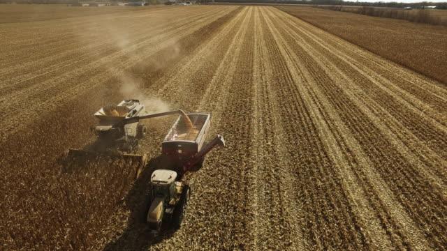 vídeos de stock e filmes b-roll de elevated view of combine harvesting ripe gmo corn (maize). - modificação genética