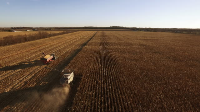 elevated view of combine harvesting ripe gmo corn (maize). - grain cart stock videos & royalty-free footage