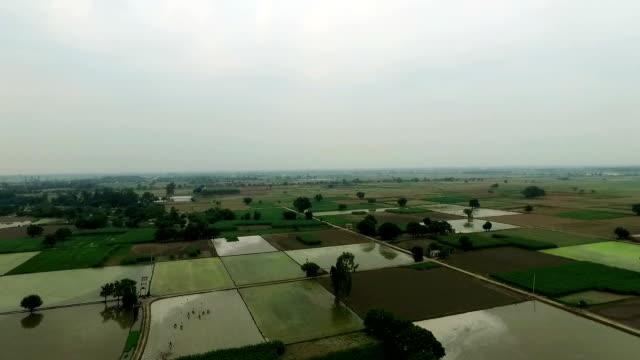stockvideo's en b-roll-footage met verhoogde uitzicht op groene boerderijen - sorgo