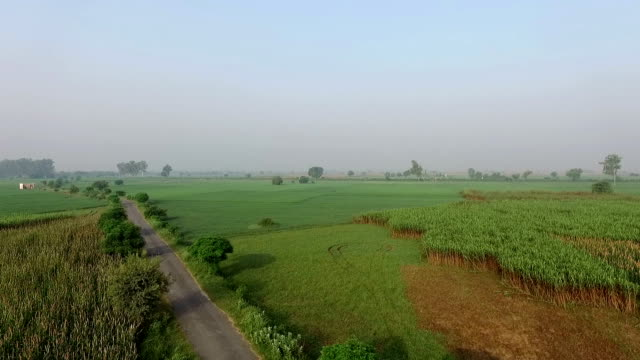 elevated view of organic field - sunny stock videos & royalty-free footage