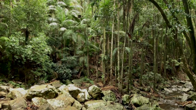 elevated view of rainforest canopy in australian rainforest 4k - tree canopy stock videos & royalty-free footage