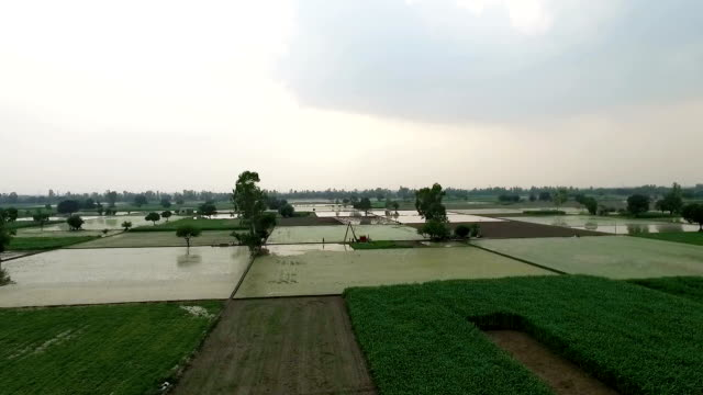 elevated view of rice paddy and sorghum - sorghum stock videos and b-roll footage