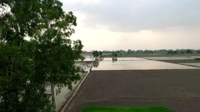forhojd utsikt ris risfält - durra bildbanksvideor och videomaterial från bakom kulisserna
