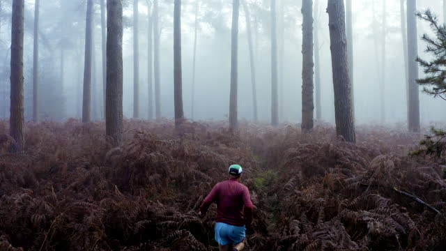 elevated view of runner in misty forest - only mid adult men stock videos & royalty-free footage