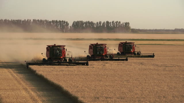 elevated view of three combines harvesting grain in a large field. - three people stock videos & royalty-free footage