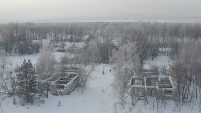 elk (moose) in chernobyl zone - abandoned stock videos & royalty-free footage