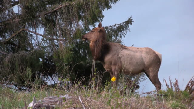 Elk On Bluff