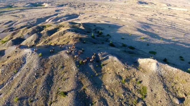 elk running around mt. st. helens - puma stock videos & royalty-free footage