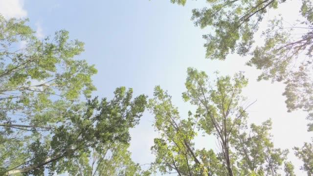 elm trees aerial footage