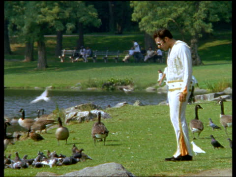 elvis impersonator feed birds near pond in central park, manhattan - musician stock videos & royalty-free footage
