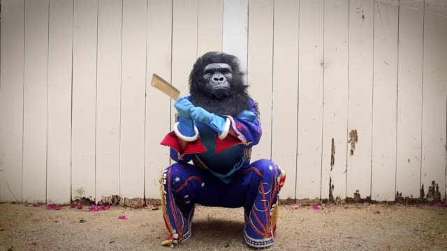 vidéos et rushes de elvis impersonator in gorilla mask swiping at bananas with knife - armement